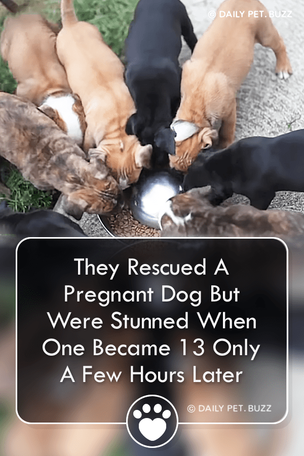They Rescued A Pregnant Dog But Were Stunned When One Became 13 Only A Few Hours Later