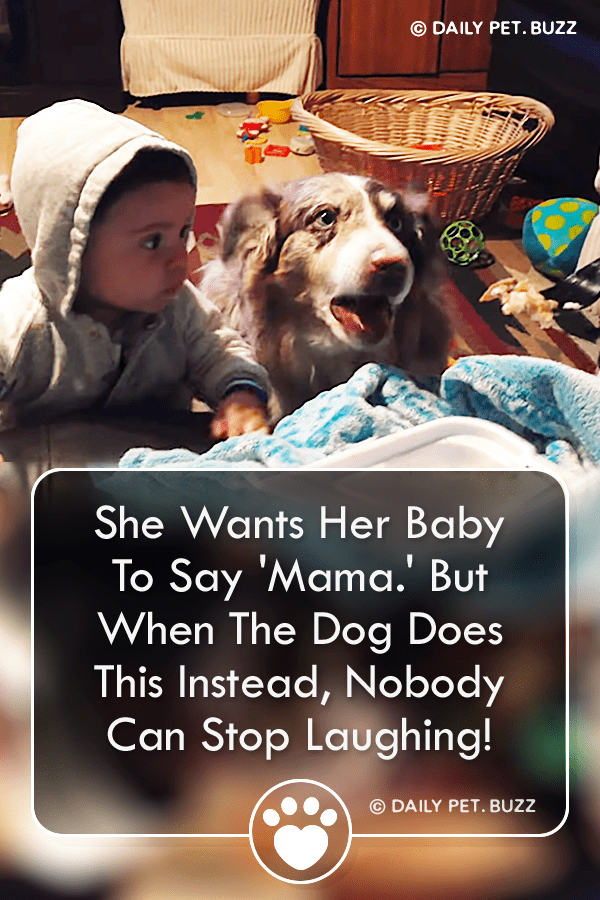 She Wants Her Baby To Say \'Mama.\' But When The Dog Does This Instead, Nobody Can Stop Laughing!