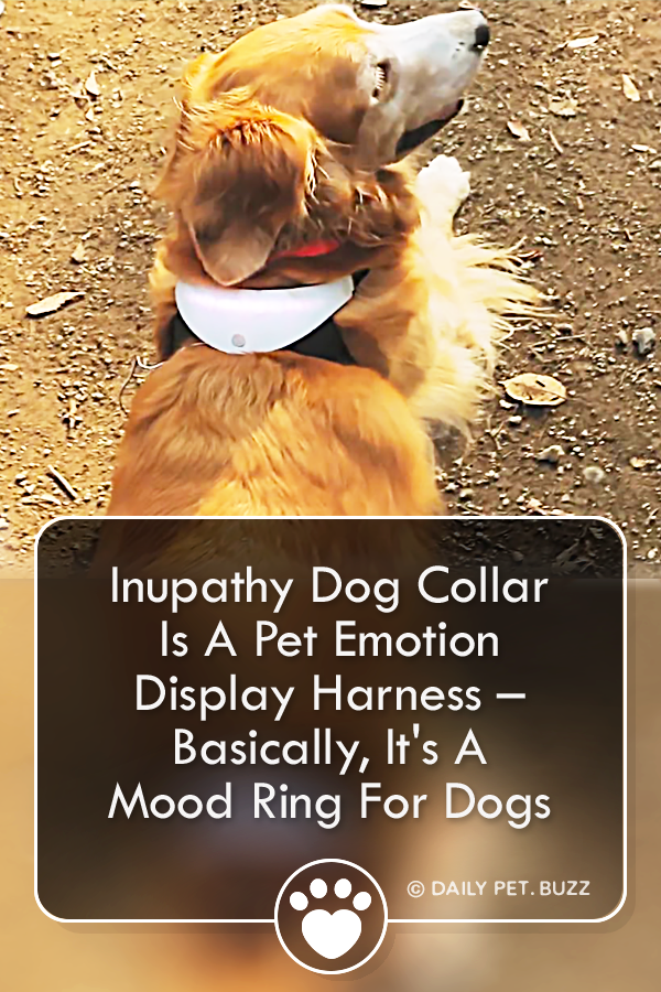 Inupathy Dog Collar Is A Pet Emotion Display Harness – Basically, It\'s A Mood Ring For Dogs