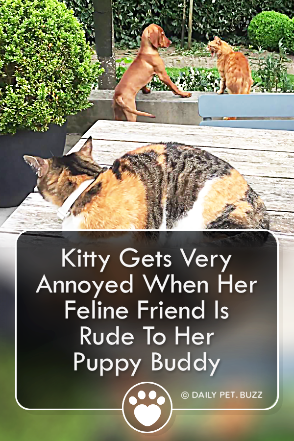 Kitty Gets Very Annoyed When Her Feline Friend Is Rude To Her Puppy Buddy