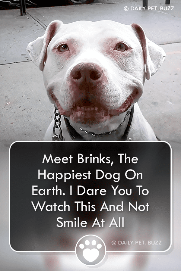 Meet Brinks, The Happiest Dog On Earth. I Dare You To Watch This And Not Smile At All