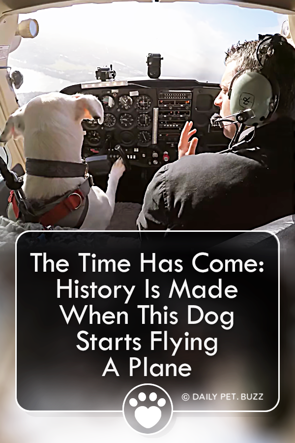 The Time Has Come: History Is Made When This Dog Starts Flying A Plane