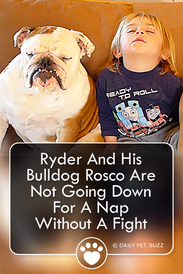 Ryder And His Bulldog Rosco Are Not Going Down For A Nap Without A Fight