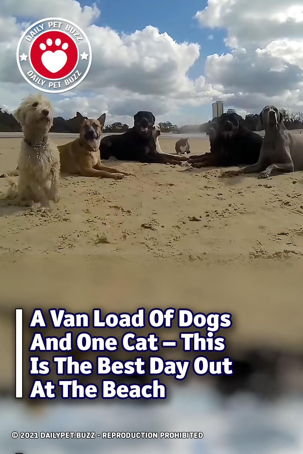 A Van Load Of Dogs And One Cat – This Is The Best Day Out At The Beach
