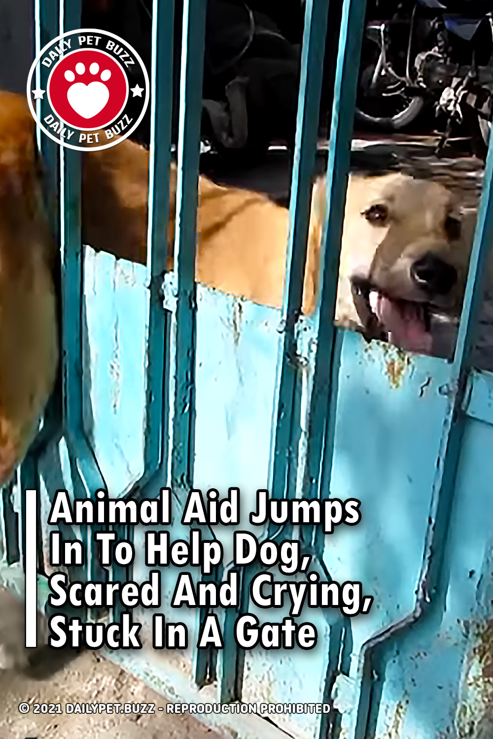Animal Aid Jumps In To Help Dog, Scared And Crying, Stuck In A Gate
