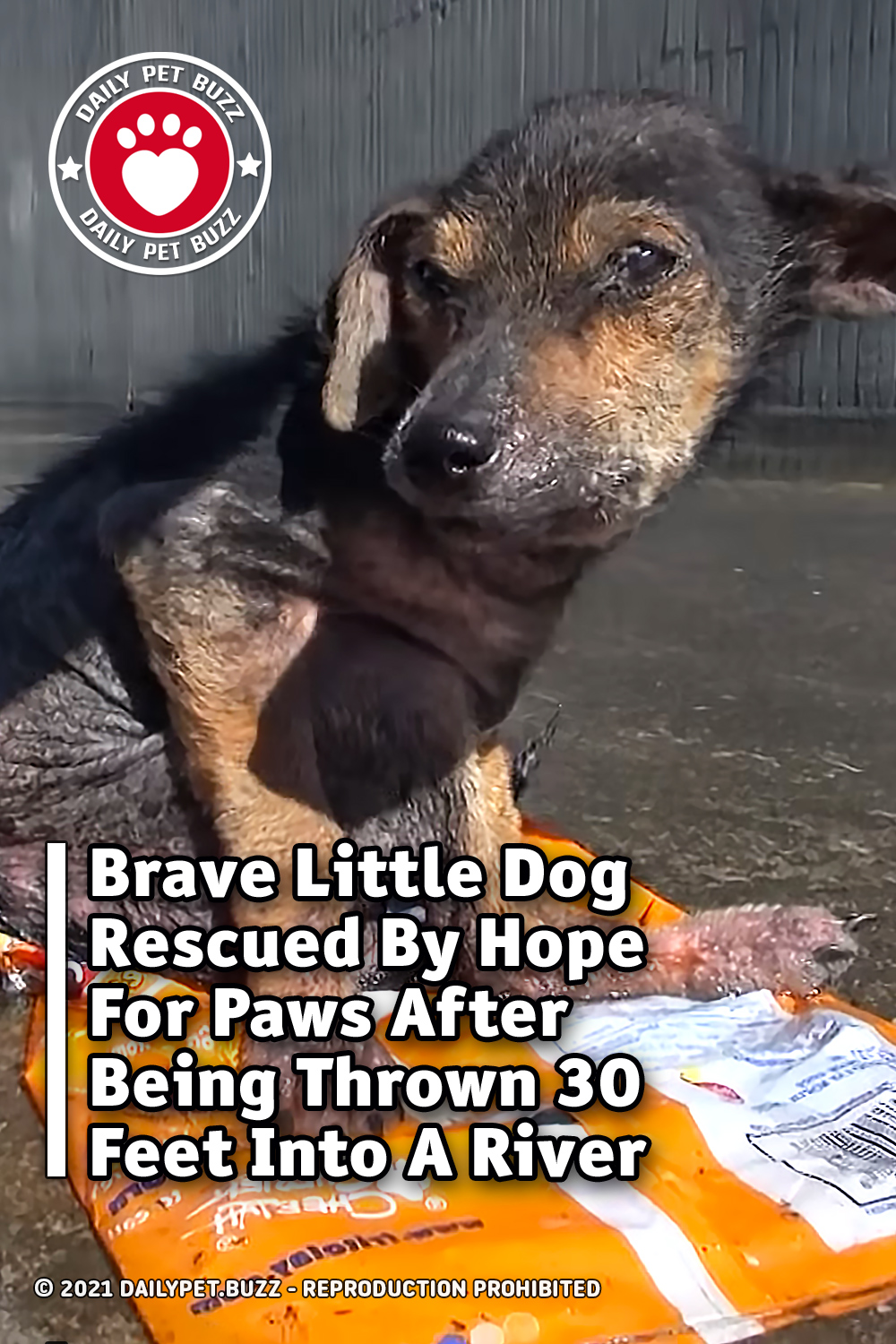 Brave Little Dog Rescued By Hope For Paws After Being Thrown 30 Feet Into A River