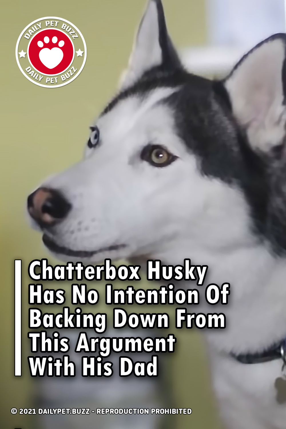 Chatterbox Husky Has No Intention Of Backing Down From This Argument With His Dad