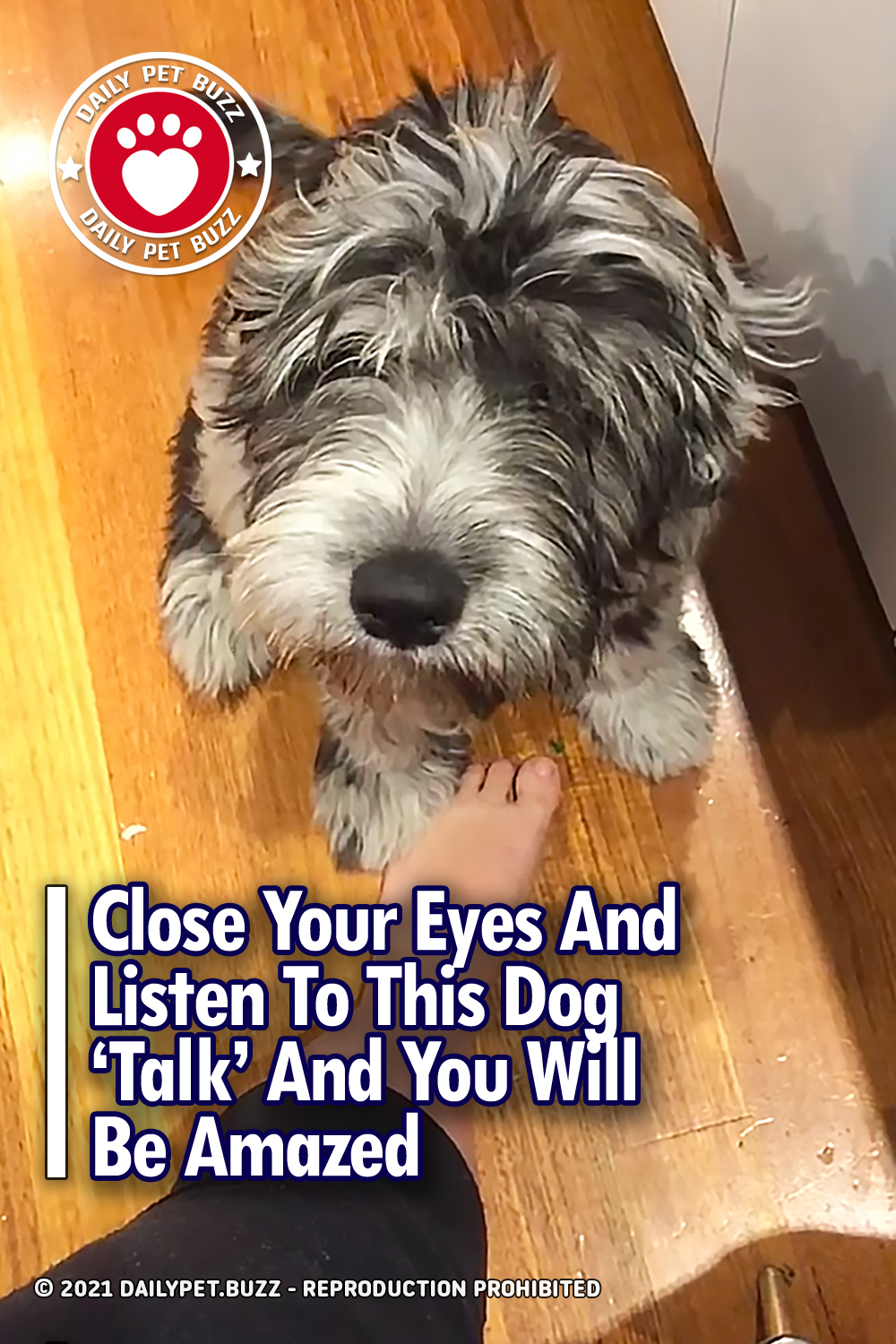 Close Your Eyes And Listen To This Dog \'Talk\' And You Will Be Amazed