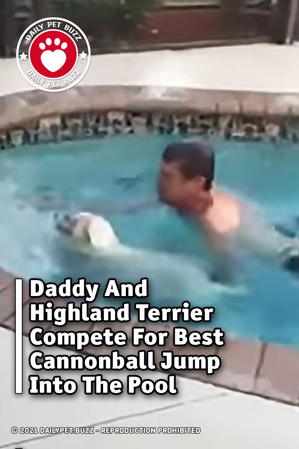 Daddy And Highland Terrier Compete For Best Cannonball Jump Into The Pool