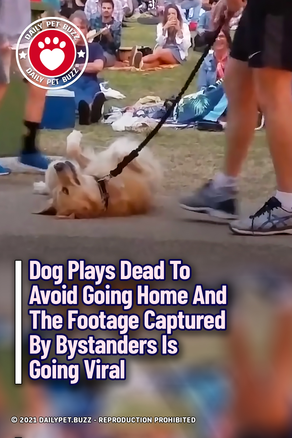 Dog Plays Dead To Avoid Going Home And The Footage Captured By Bystanders Is Going Viral