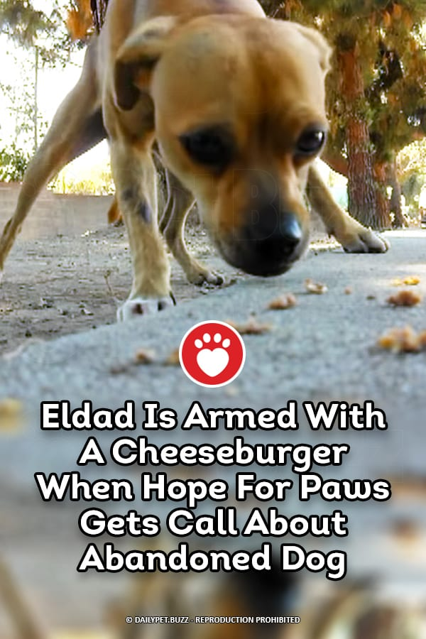 Eldad Is Armed With A Cheeseburger When Hope For Paws Gets Call About Abandoned Dog