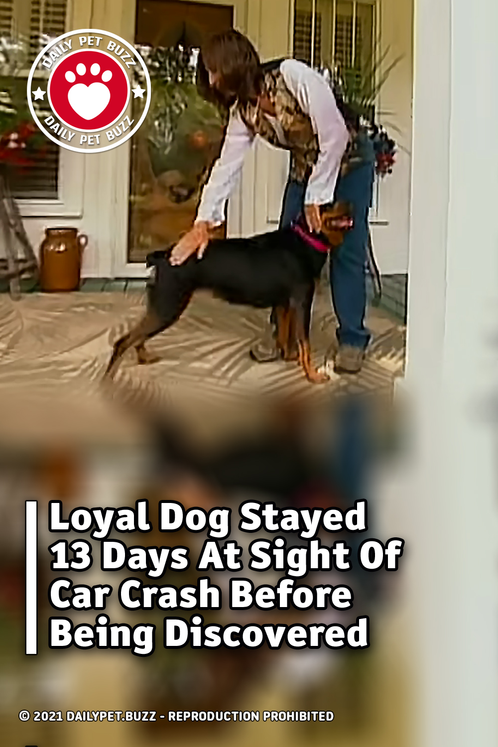 Loyal Dog Stayed 13 Days At Sight Of Car Crash Before Being Discovered