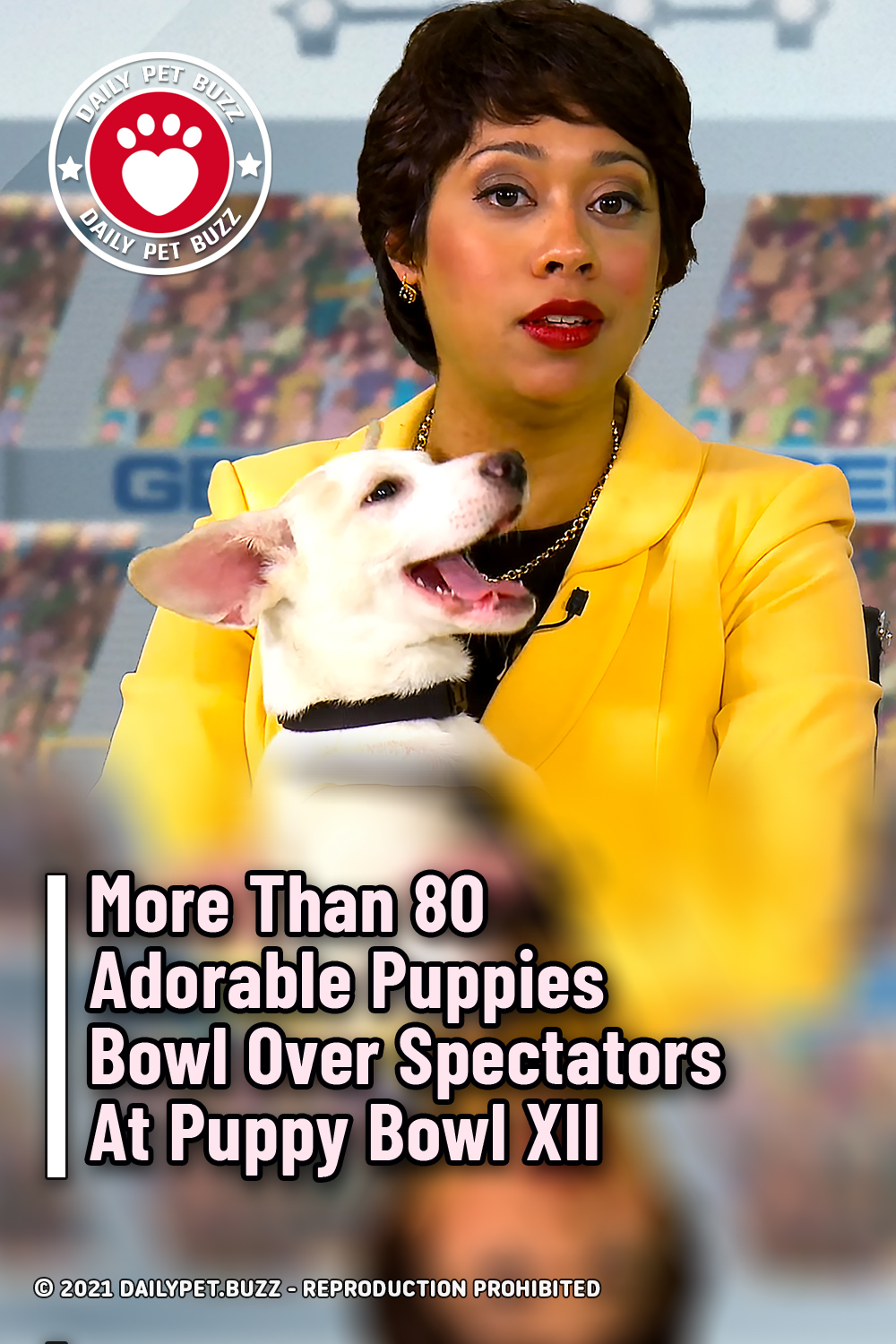 More Than 80 Adorable Puppies Bowl Over Spectators At Puppy Bowl XII