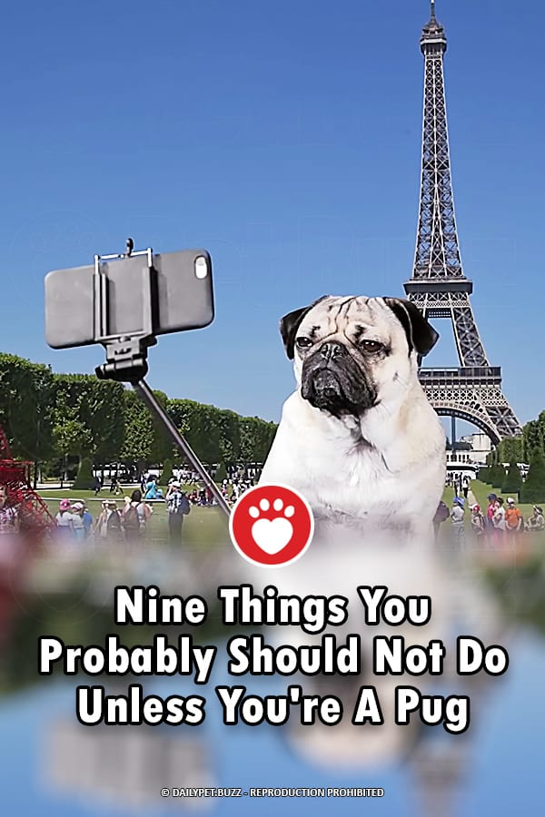 Nine Things You Probably Should Not Do Unless You\'re A Pug