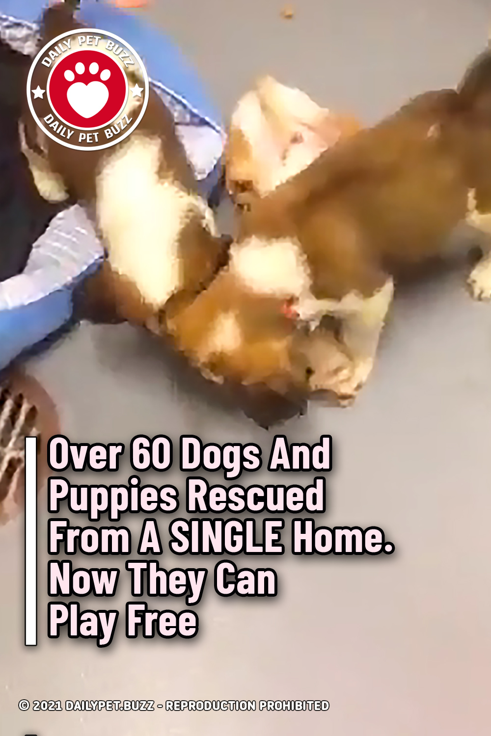 Over 60 Dogs And Puppies Rescued From A SINGLE Home. Now They Can Play Free