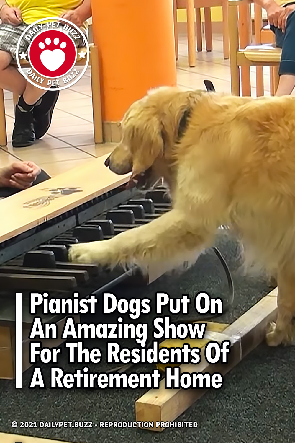 Pianist Dogs Put On An Amazing Show For The Residents Of A Retirement Home