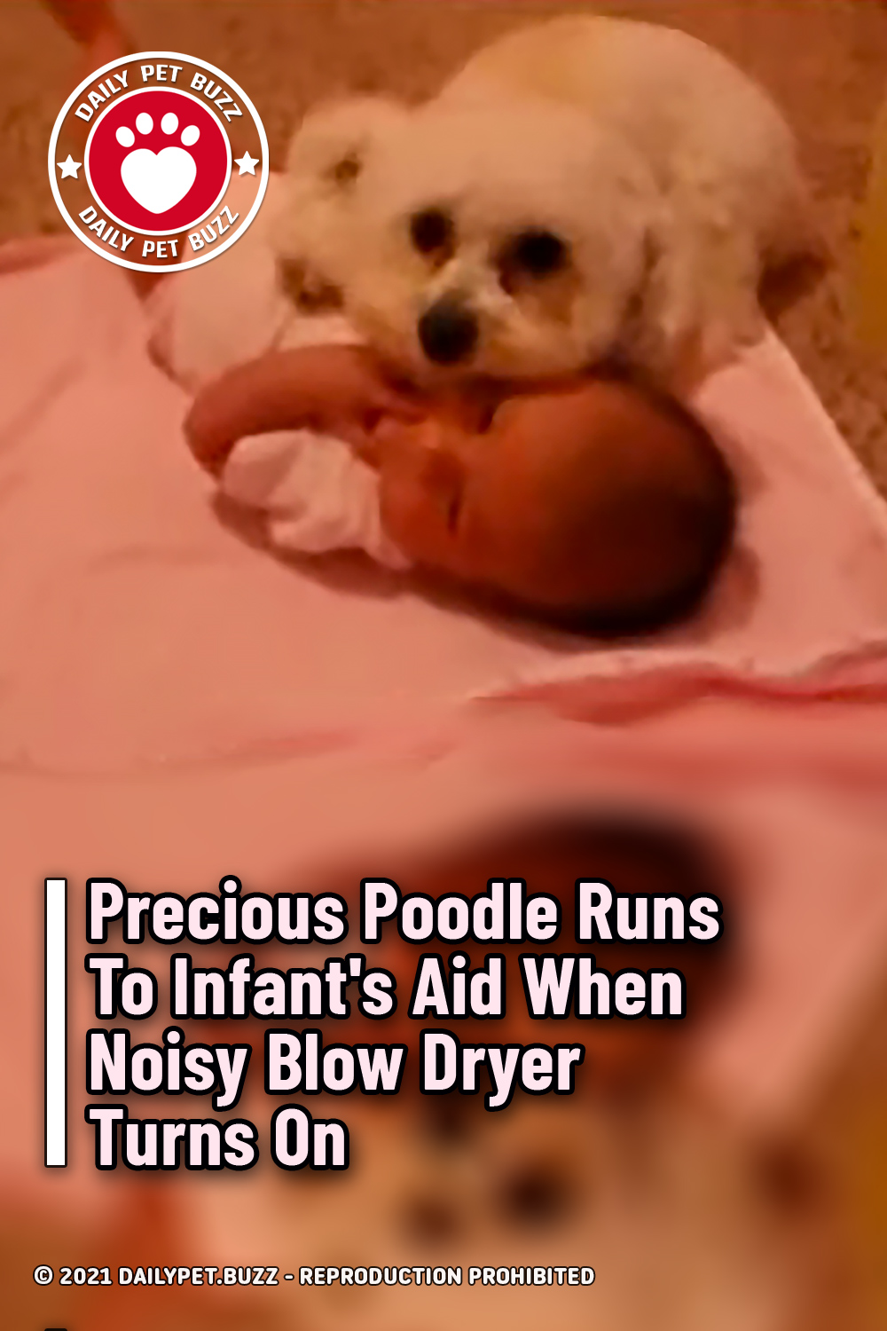 Precious Poodle Runs To Infant\'s Aid When Noisy Blow Dryer Turns On