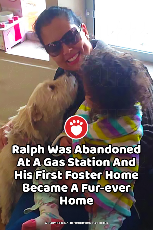 Ralph Was Abandoned At A Gas Station And His First Foster Home Became A Fur-ever Home