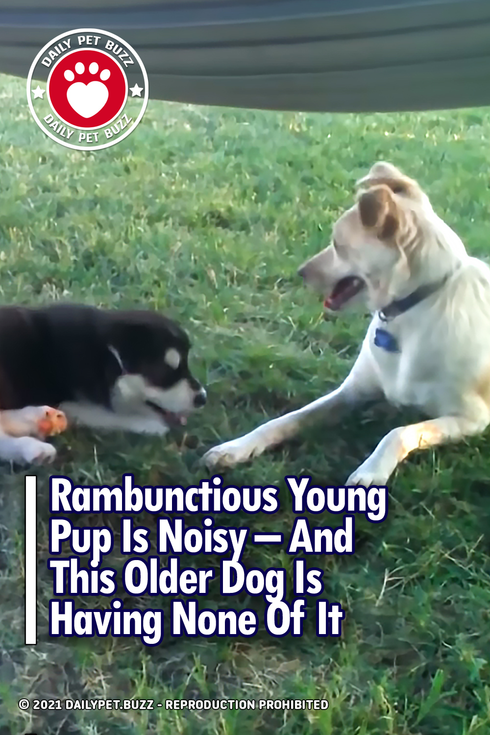 Rambunctious Young Pup Is Noisy – And This Older Dog Is Having None Of It