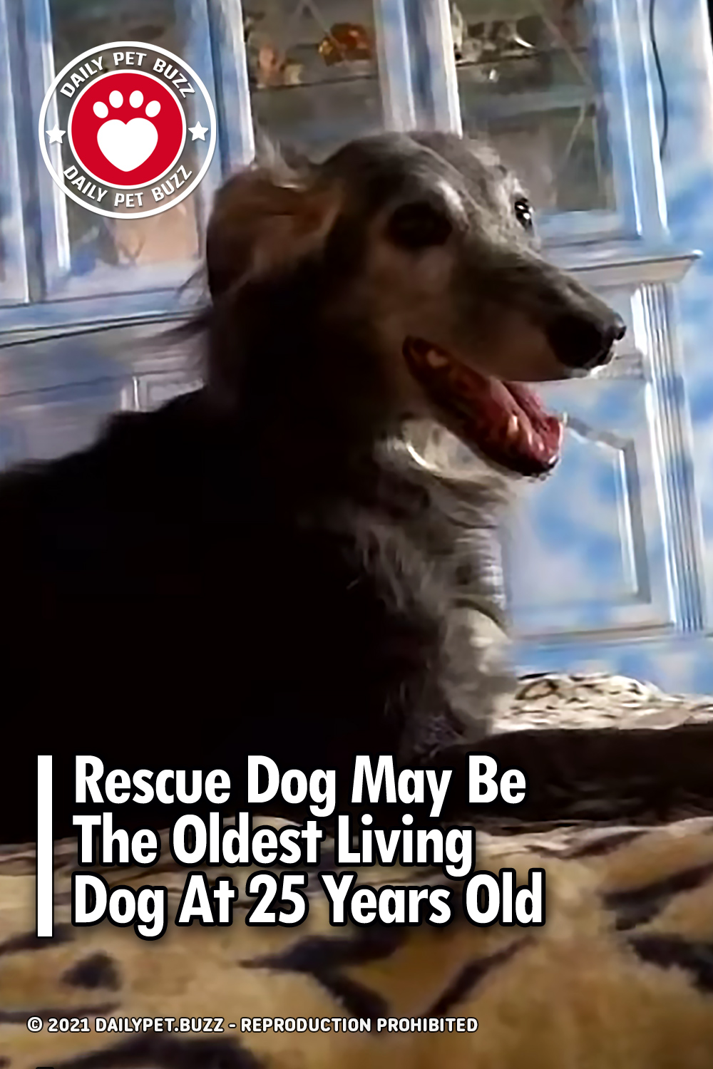 Rescue Dog May Be The Oldest Living Dog At 25 Years Old