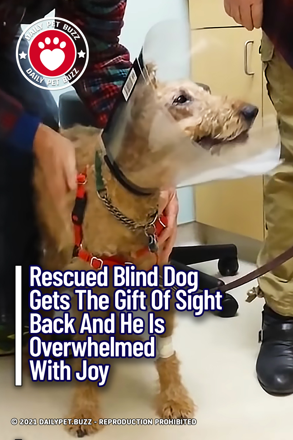 Rescued Blind Dog Gets The Gift Of Sight Back And He Is Overwhelmed With Joy