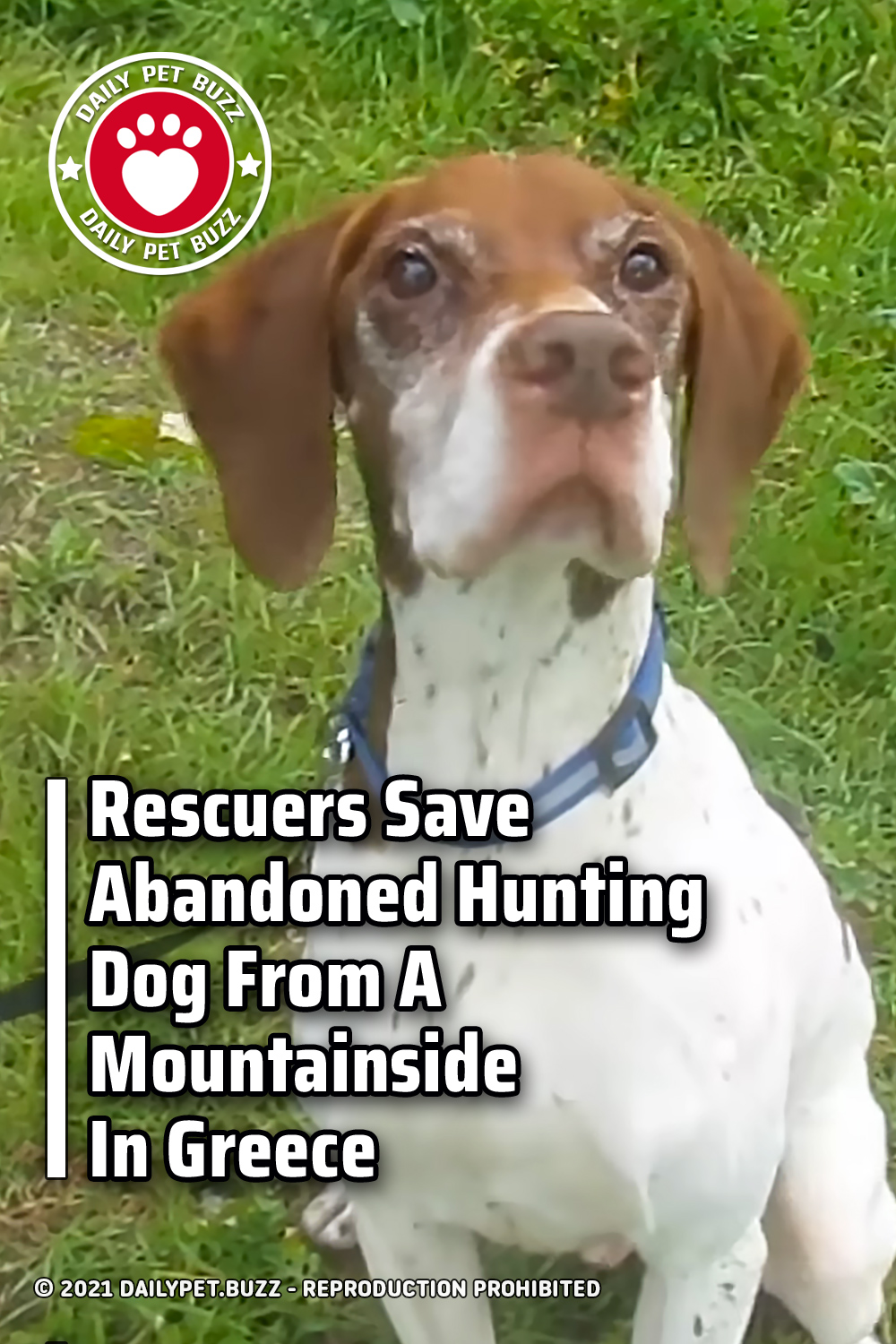 Rescuers Save Abandoned Hunting Dog From A Mountainside In Greece