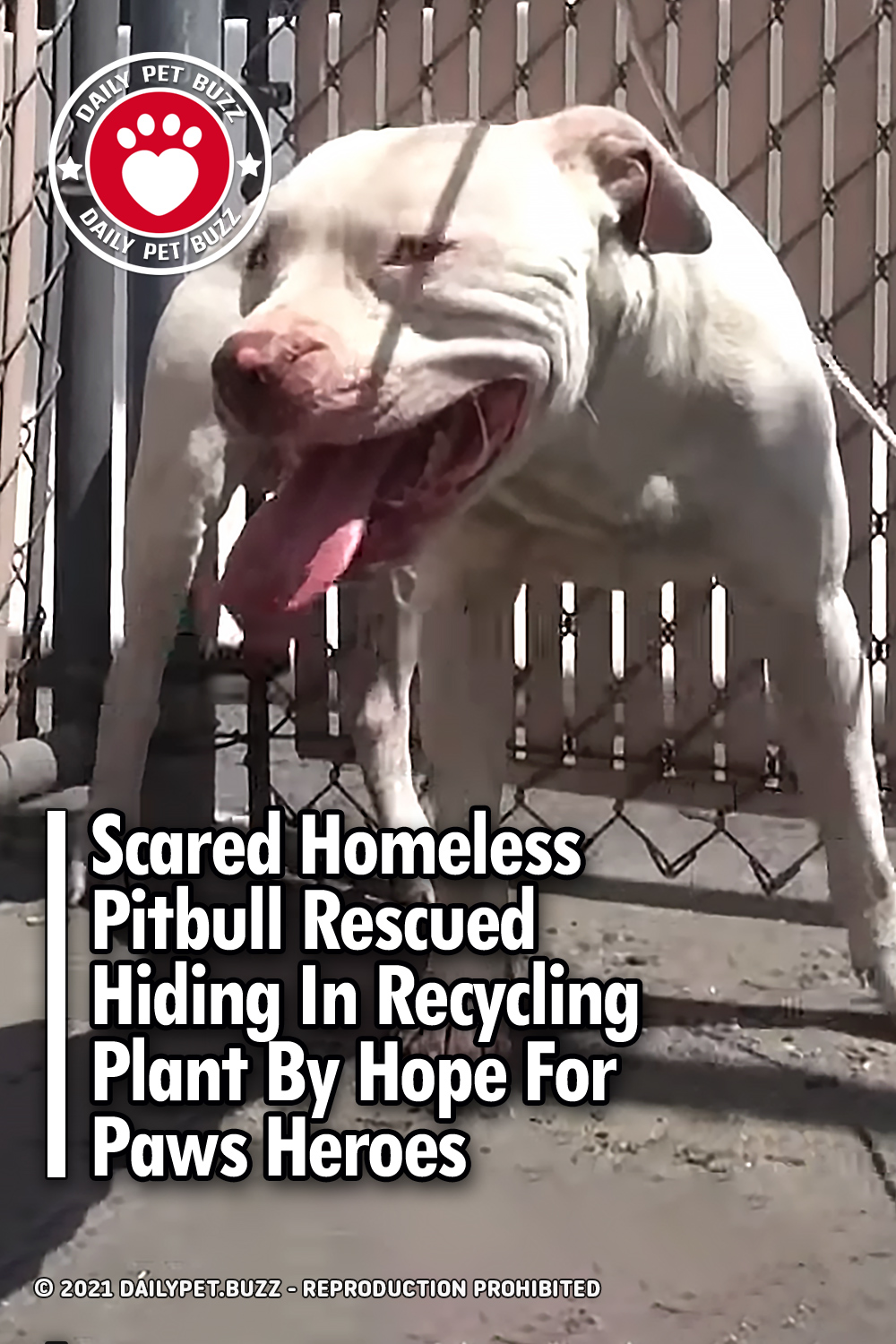 Scared Homeless Pitbull Rescued Hiding In Recycling Plant By Hope For Paws Heroes