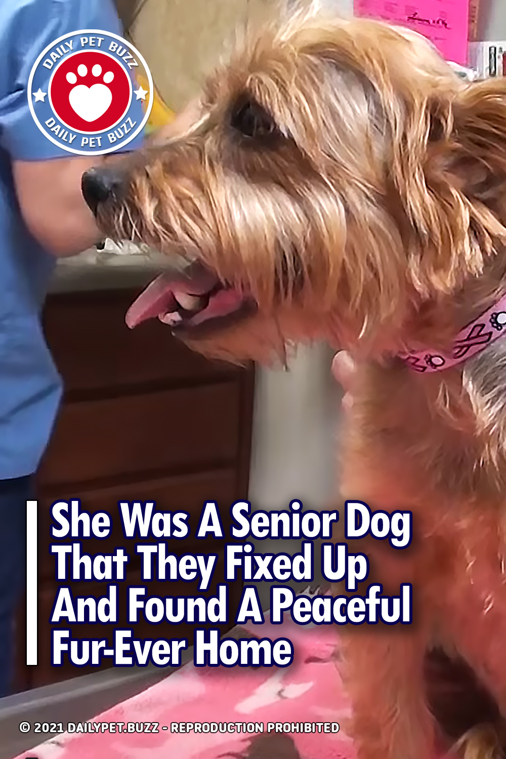She Was A Senior Dog That They Fixed Up And Found A Peaceful Fur-Ever Home