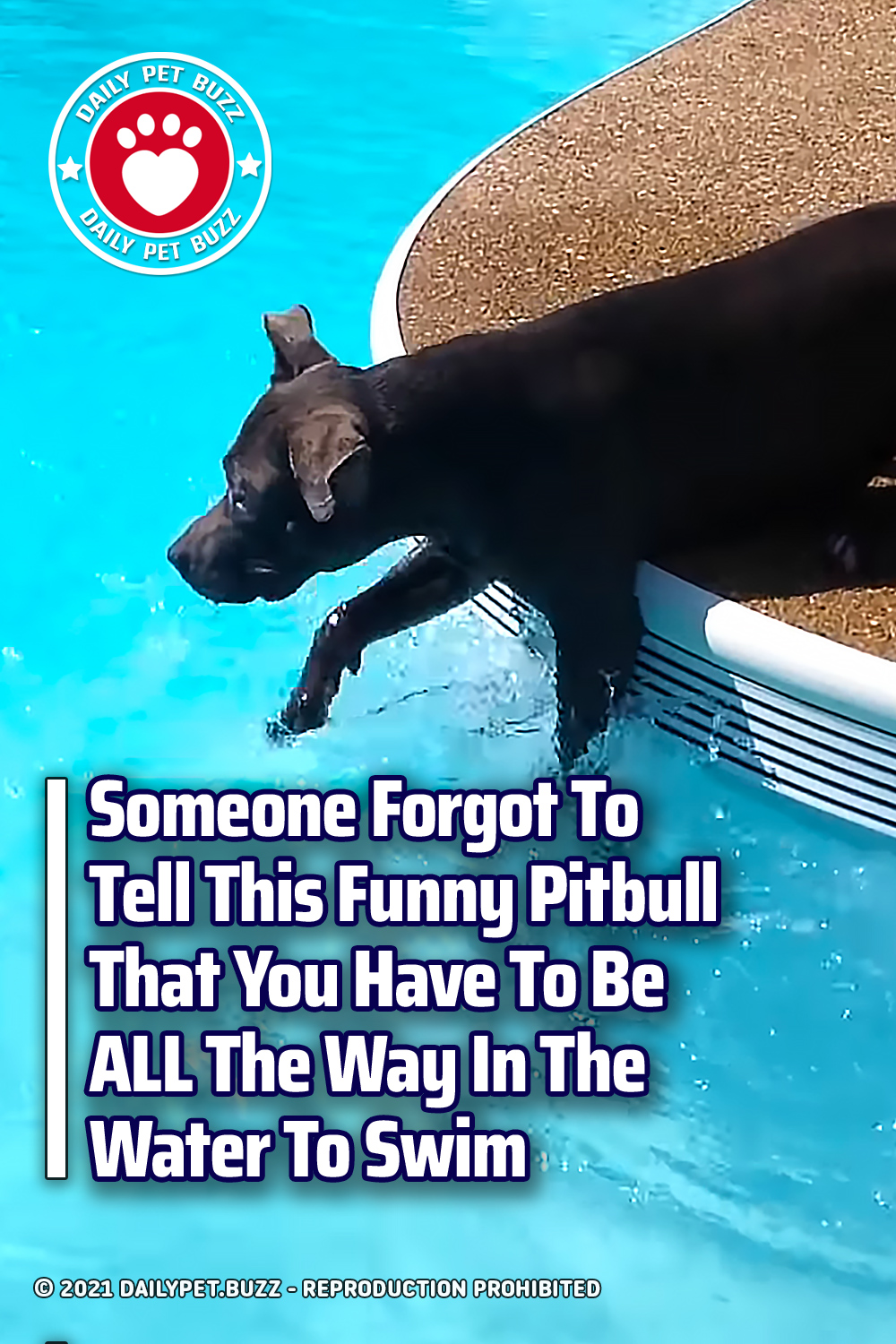 Someone Forgot To Tell This Funny Pitbull That You Have To Be ALL The Way In The Water To Swim