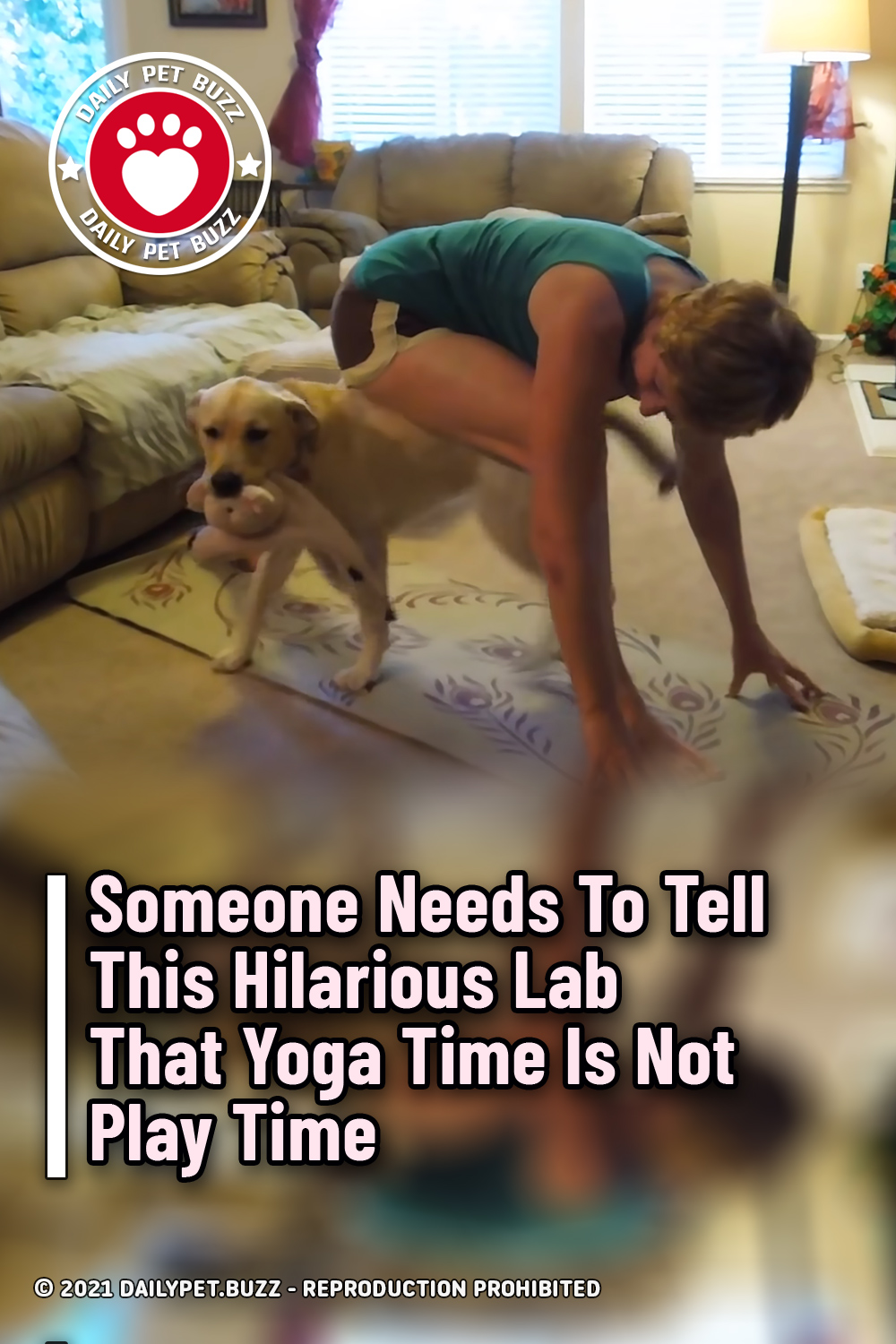 Someone Needs To Tell This Hilarious Lab That Yoga Time Is Not Play Time