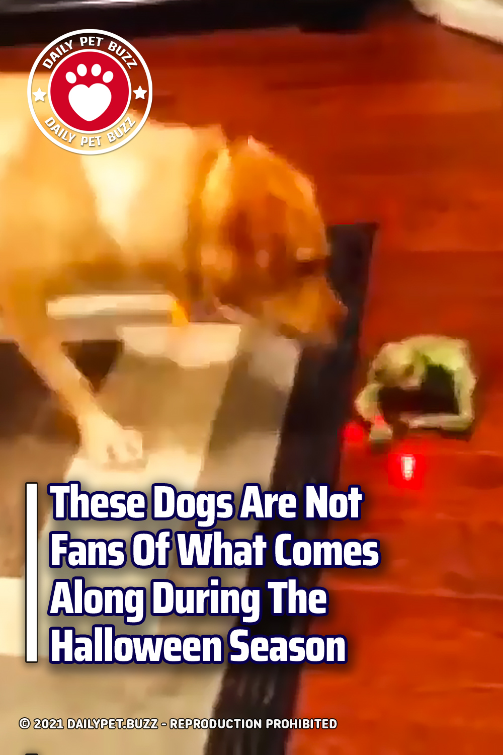 These Dogs Are Not Fans Of What Comes Along During The Halloween Season