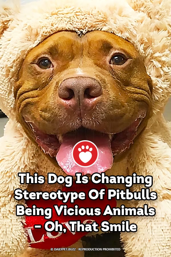 This Dog Is Changing Stereotype Of Pitbulls Being Vicious Animals – Oh, That Smile
