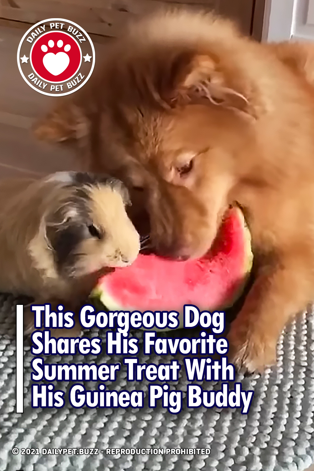 This Gorgeous Dog Shares His Favorite Summer Treat With His Guinea Pig Buddy