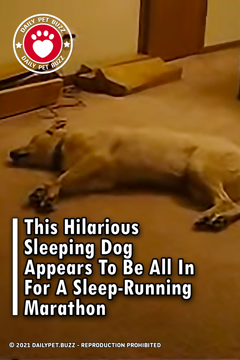 This Hilarious Sleeping Dog Appears To Be All In For A Sleep-Running Marathon