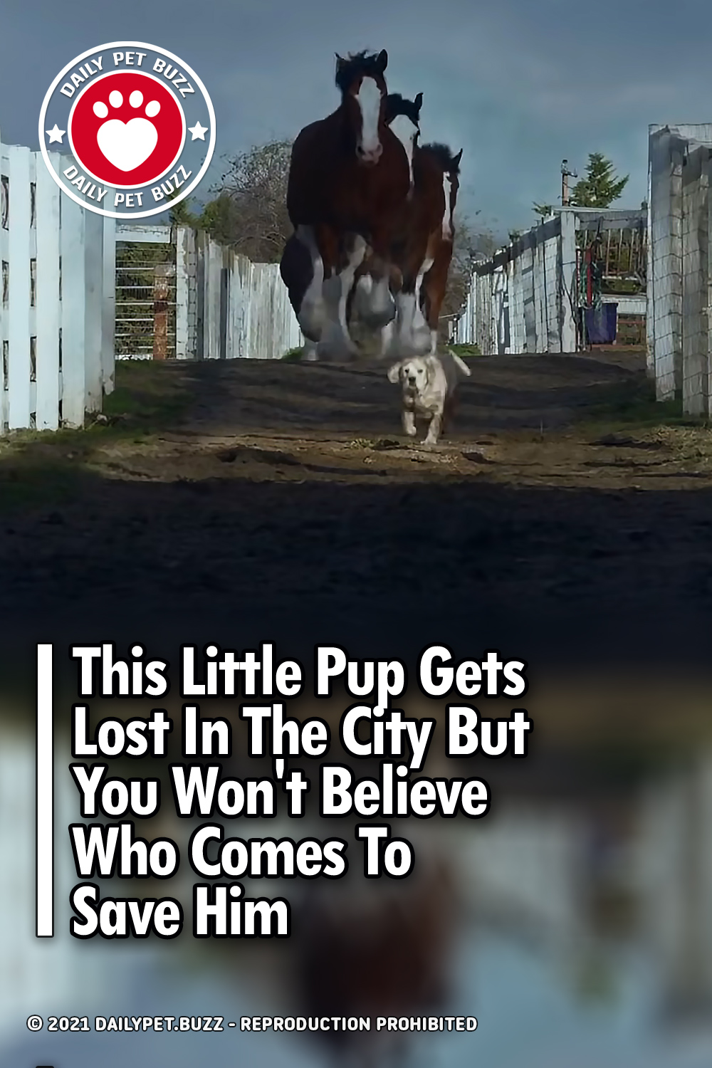 This Little Pup Gets Lost In The City But You Won\'t Believe Who Comes To Save Him