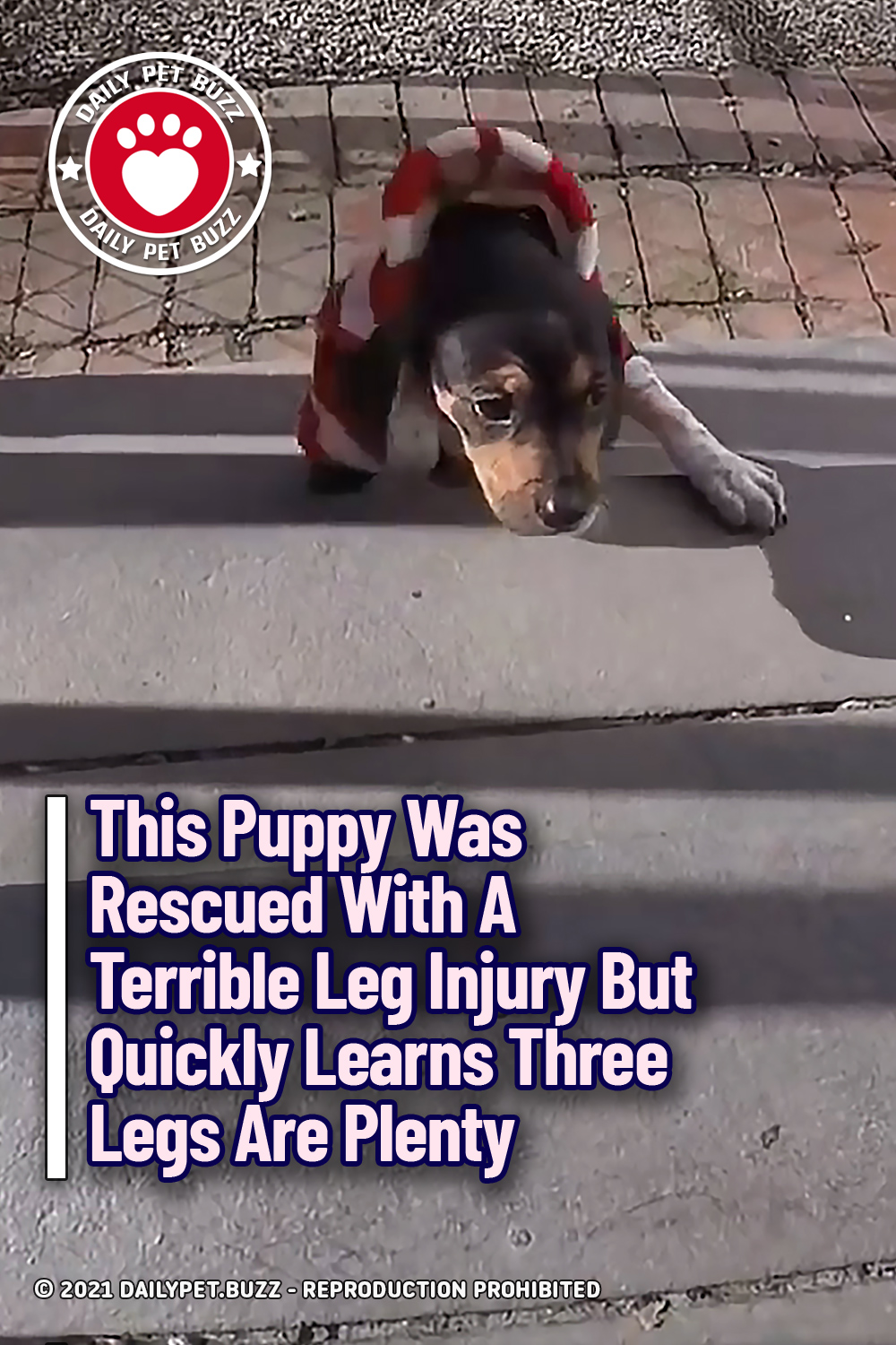 This Puppy Was Rescued With A Terrible Leg Injury But Quickly Learns Three Legs Are Plenty