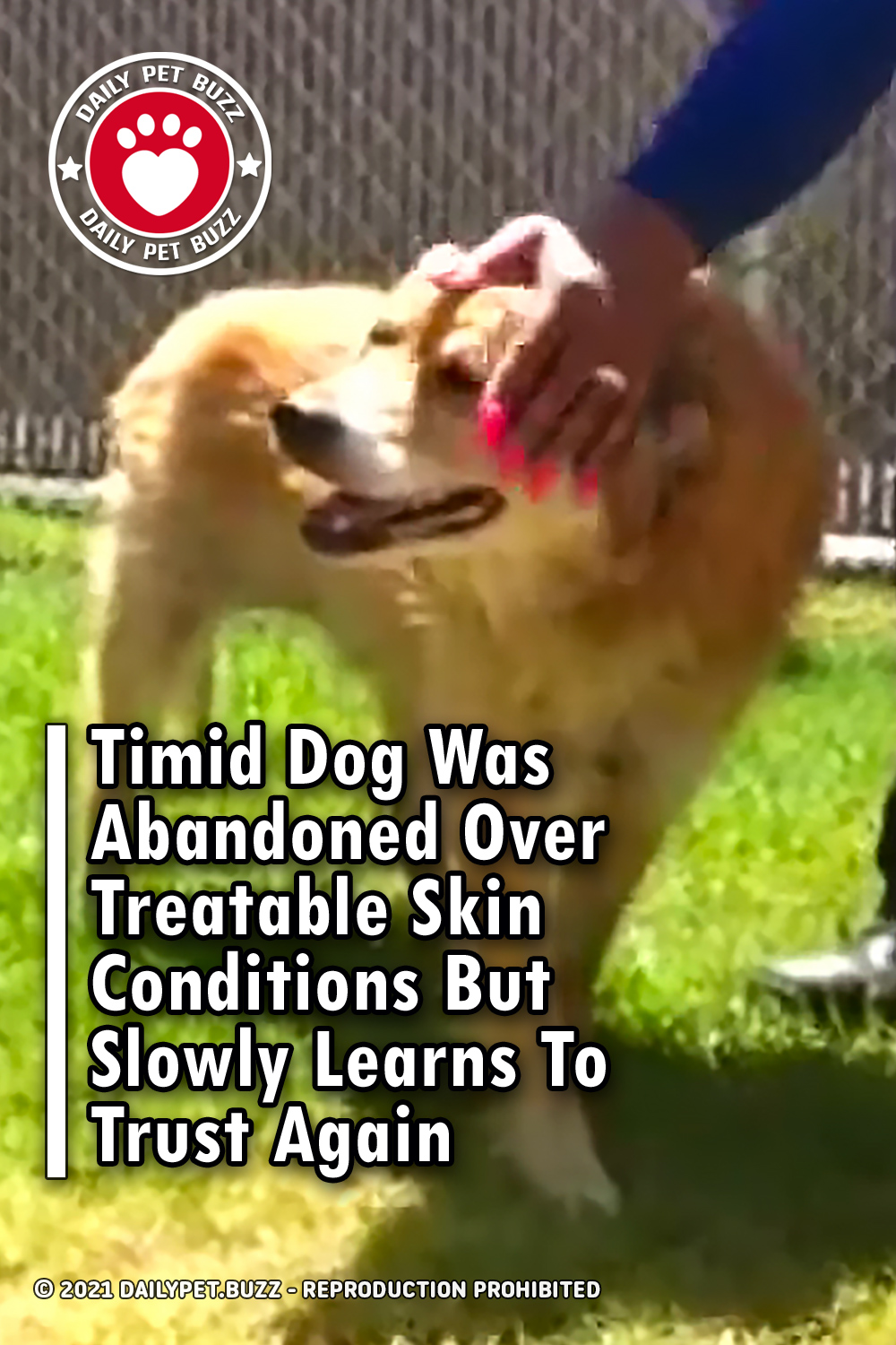 Timid Dog Was Abandoned Over Treatable Skin Conditions But Slowly Learns To Trust Again