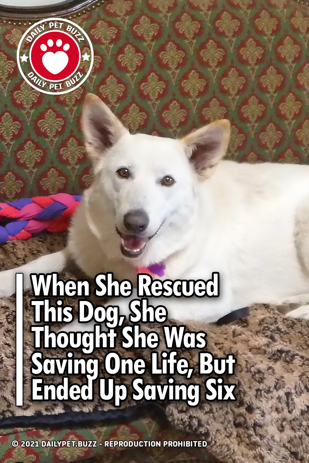 When She Rescued This Dog, She Thought She Was Saving One Life, But Ended Up Saving Six