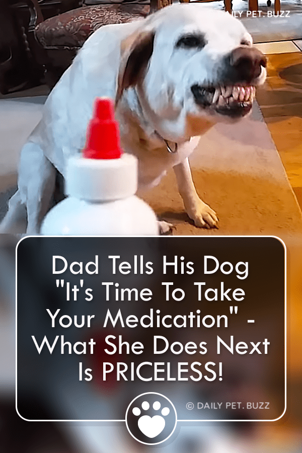 This adorable Lab is not interested in having her medication.  Watch the hysterical faces she pulls. #labrador #labradors #dog #dogs #pets #animals #animalvideos #cute #funny