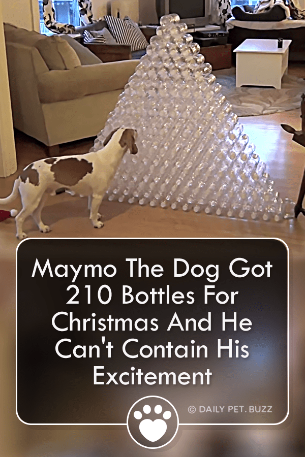 Maymo The Dog Got 210 Bottles For Christmas And He Can\'t Contain His Excitement