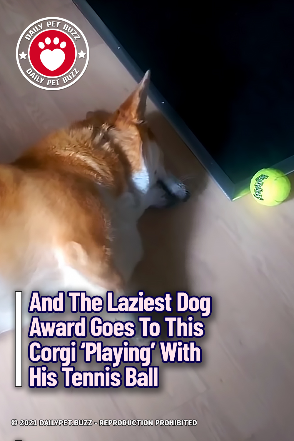 And The Laziest Dog Award Goes To This Corgi \'Playing\' With His Tennis Ball