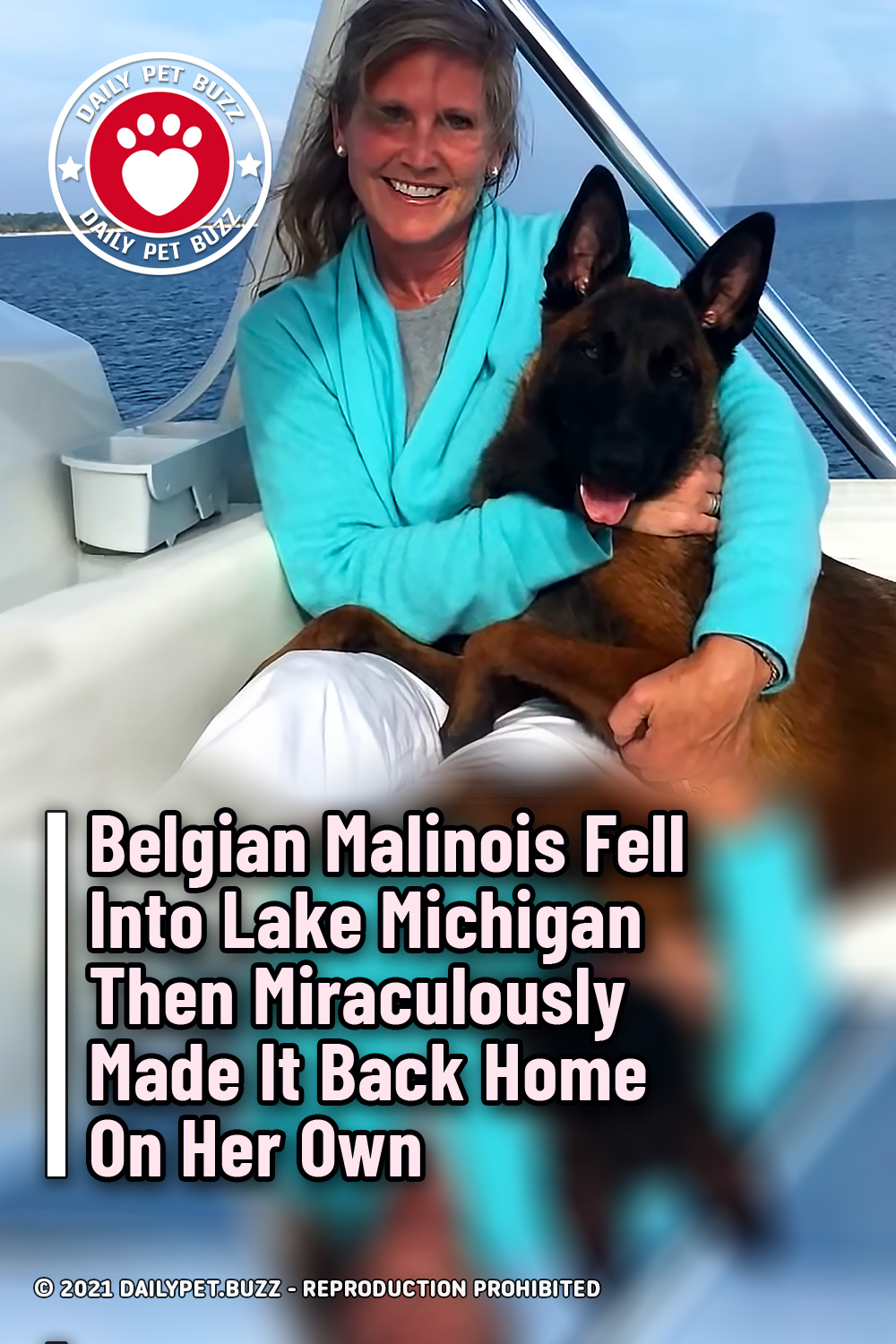 Belgian Malinois Fell Into Lake Michigan Then Miraculously Made It Back Home On Her Own
