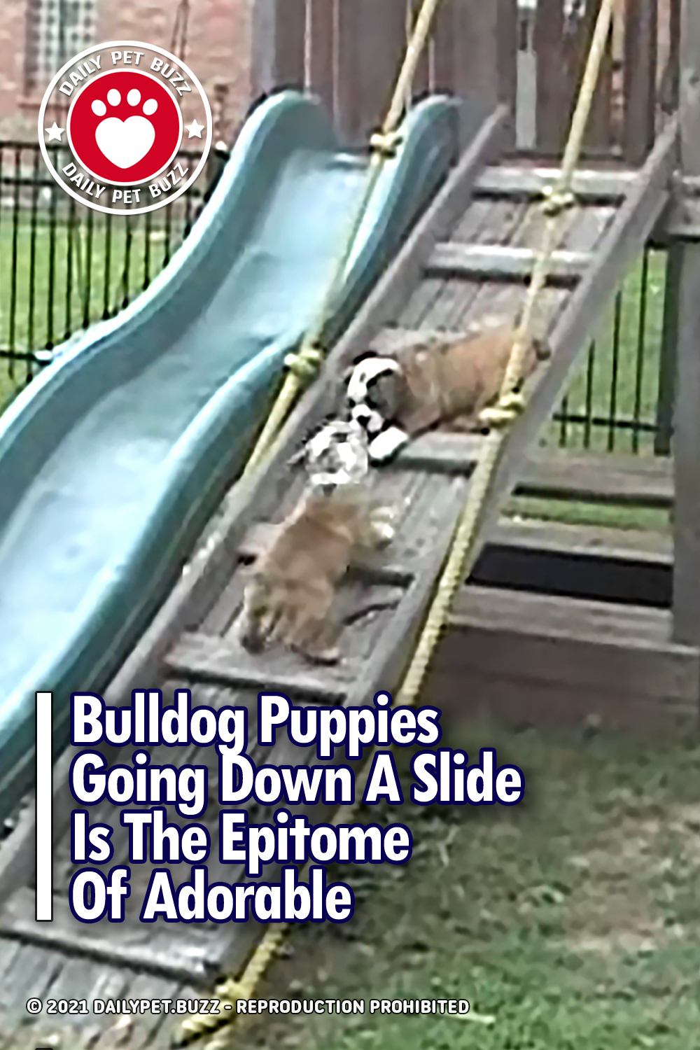 Bulldog Puppies Going Down A Slide Is The Epitome Of Adorable