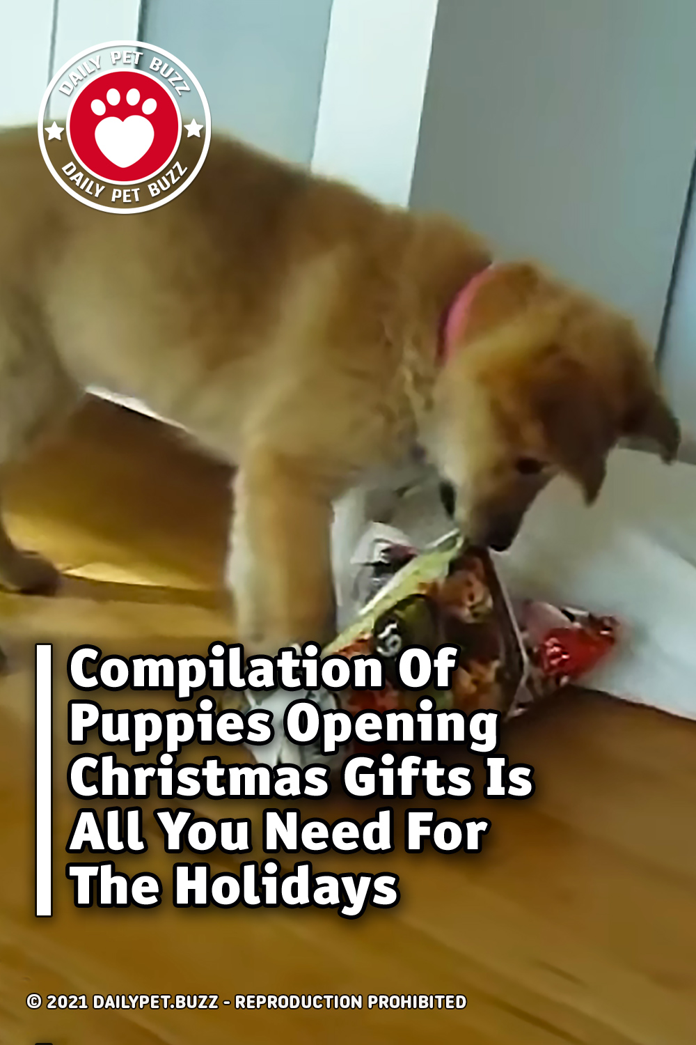 Compilation Of Puppies Opening Christmas Gifts Is All You Need For The Holidays