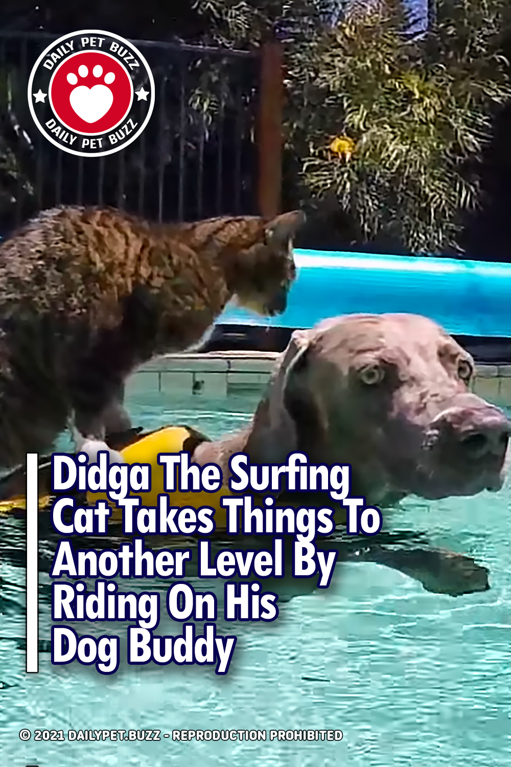 Didga The Surfing Cat Takes Things To Another Level By Riding On His Dog Buddy