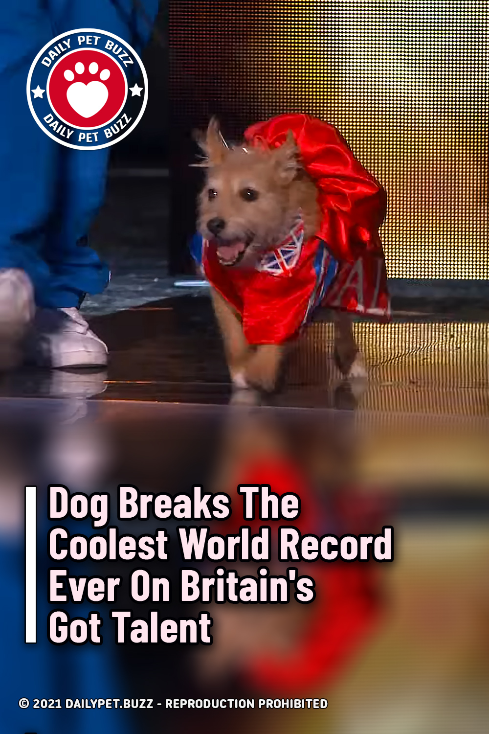 Dog Breaks The Coolest World Record Ever On Britain\'s Got Talent