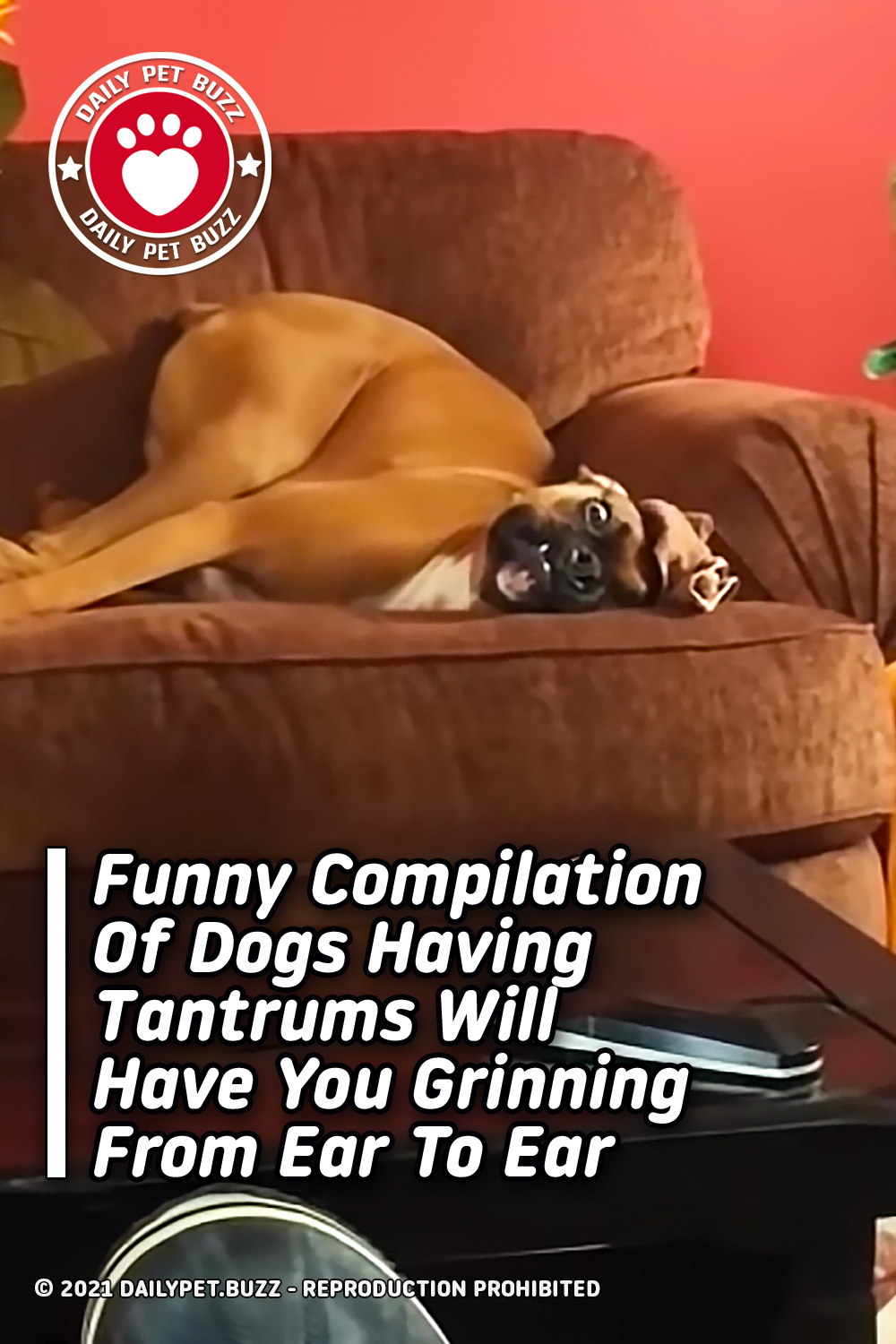 Funny Compilation Of Dogs Having Tantrums Will Have You Grinning From Ear To Ear