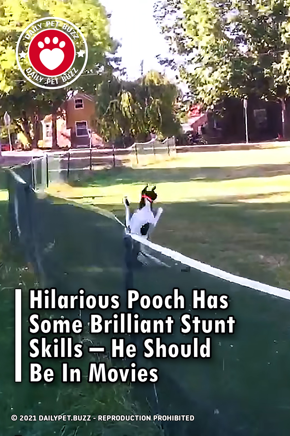 Hilarious Pooch Has Some Brilliant Stunt Skills – He Should Be In Movies