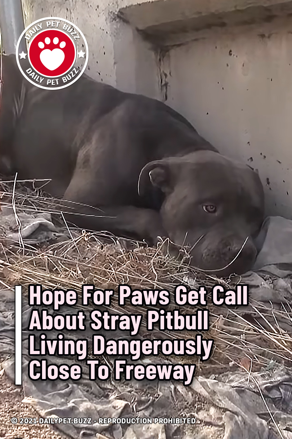 Hope For Paws Get Call About Stray Pitbull Living Dangerously Close To Freeway
