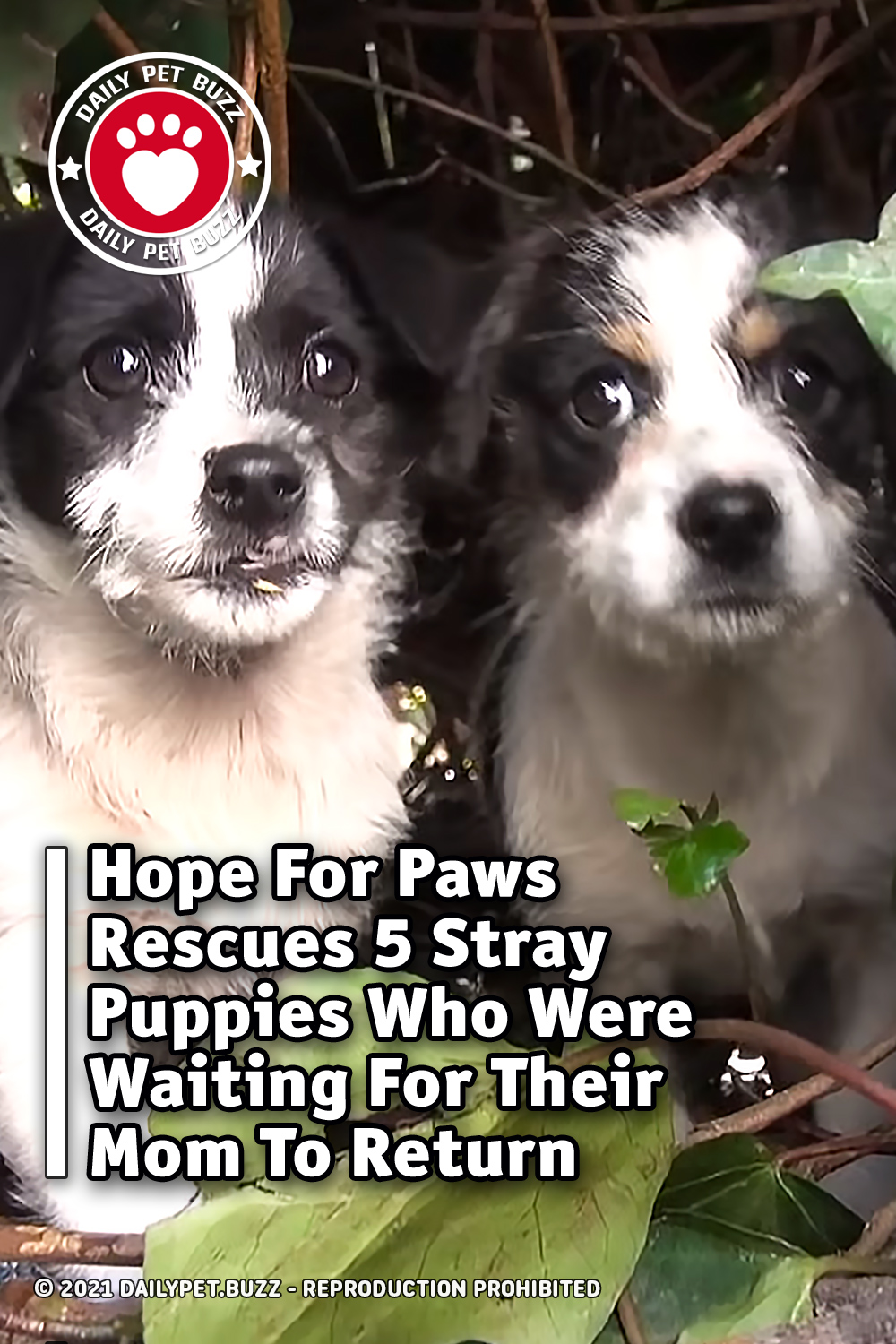 Hope For Paws Rescues 5 Stray Puppies Who Were Waiting For Their Mom To Return